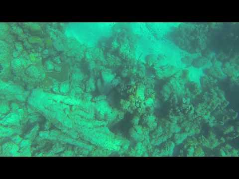 Nassau Bahamas 2017 Snorkeling 11