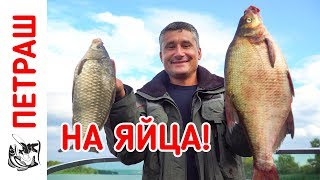 Ловля КАРАСЯ и ЛЕЩА на ЯЙЦА! Рыбалка в конце лета