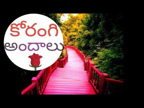 korangi forest kakinada  కోరంగి అందాలు కాకినాడ