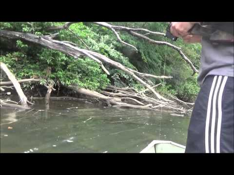 Bow Fishing For Carp Pa 2015
