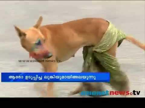 Cruelty to Animals, Kerala, India - stray dog victim of sadistic pranks