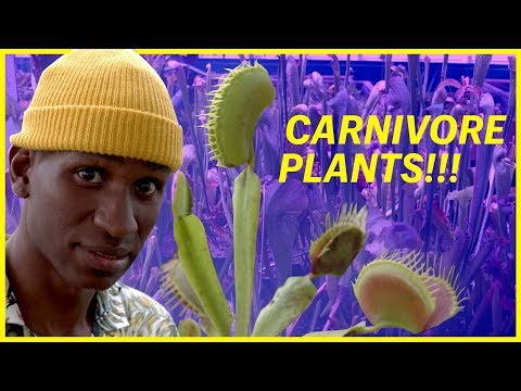 A Carnivorous Plant Nursery With Over 50,000 Plants