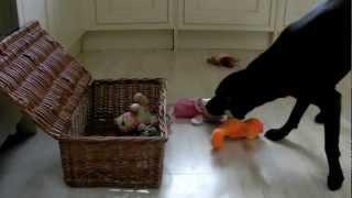 Harry's Amazing Dog Tricks Skateboard, Nesting Cups, Piggybank - Canine Communications, Gosport
