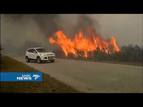 4 farms razed by veld fires in PE, Janine Lee reports
