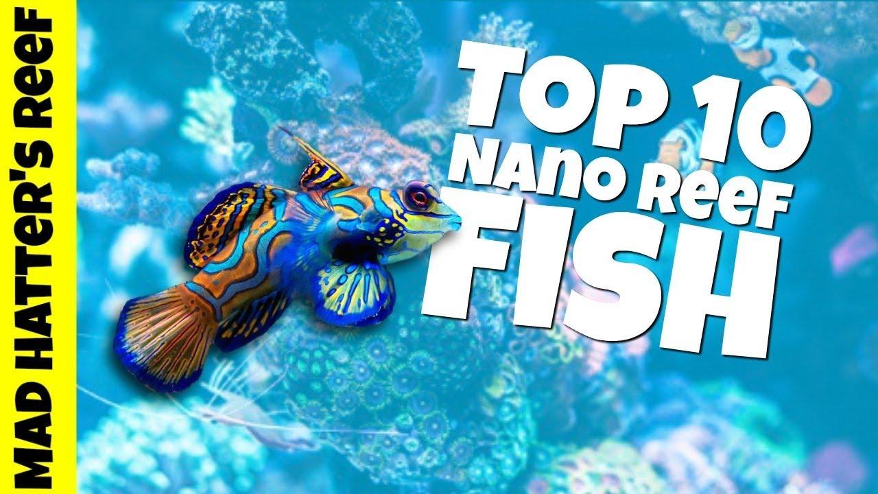 top 10 nano reef tank fish youtube