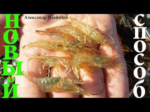 Где и как ловить креветку в Черном море