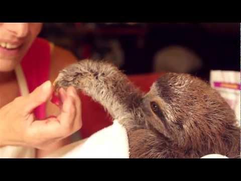 Matty the Baby Sloth