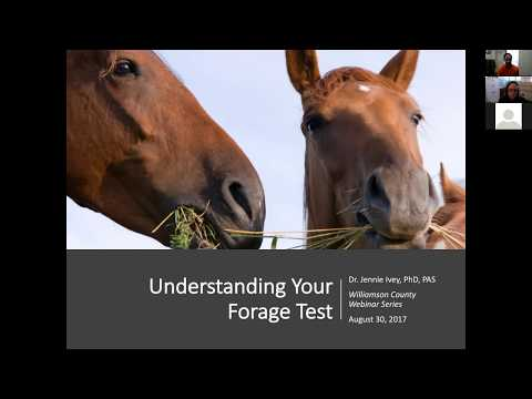 Equine Management: Understanding Forage Test