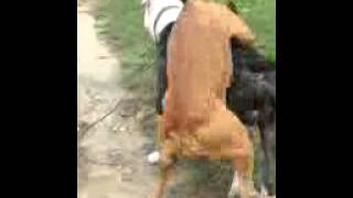 Girl dog showing boy dog how its done!