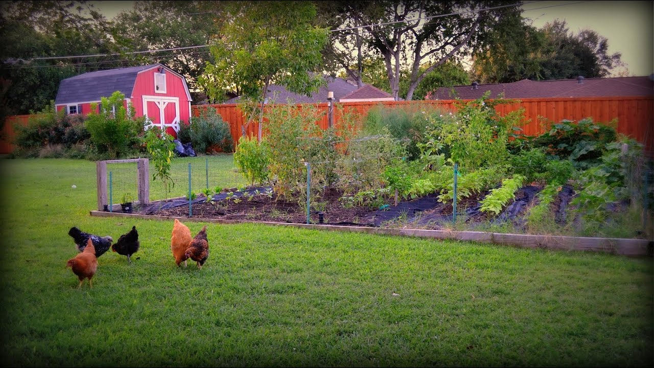 Vegetable Garden: Time For Fall Gardening   YouTube