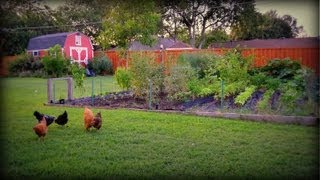 Vegetable Garden: Time for Fall Gardening