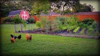 Vegetable Garden: Time for Fall Gardening