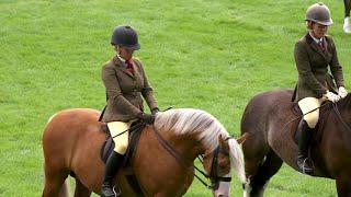 Merlod Cymreig Cob tan gyfrwy | Welsh Ponies Cob Type ridden