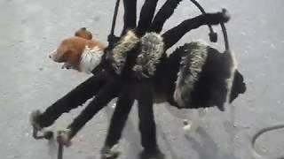 собака паук мутант птицеед фокстерьер прикол пранк