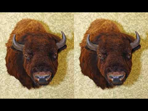 A Bear And Bison Country Inn | 705 Benchlands Trail, T1W 3G9 Canmore, Canada | AZ Hotels