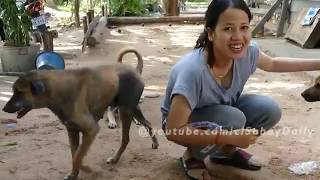 Amazing Funny girl and Dog Group - Kindly girl give the special food to Funny Puppies (Part2)