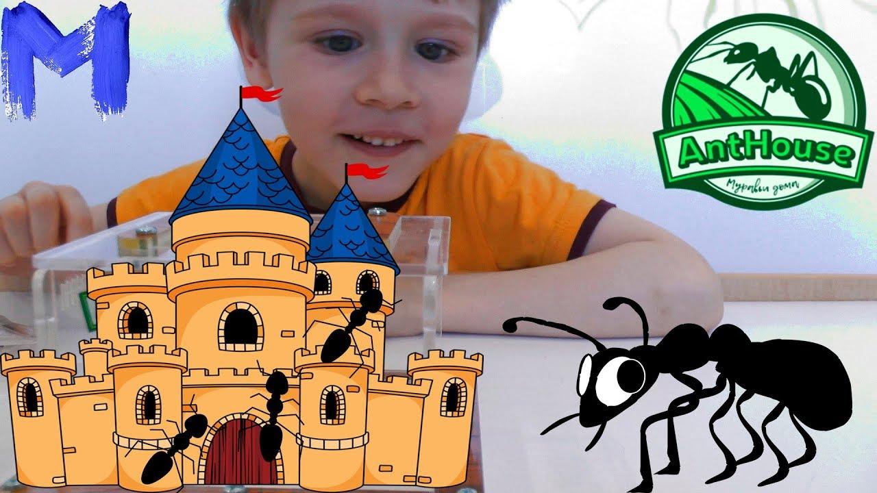 Муравьи и муравьиная ферма - Расскажем где купить хороший Формикарий
