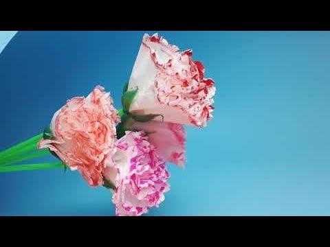 Easy way To Make Carnation Paper flower - DIY - Paper Craft  Lipstick+Tissue