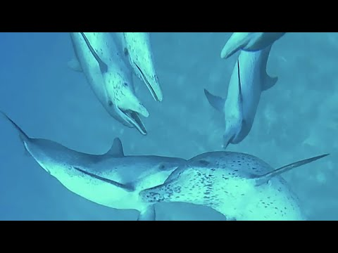 Swimming with wlid dolphins in bahamas 2019 VR 3D