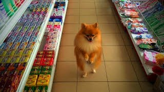 Walking Dogs🐩🐕Cute and Funny Walking Dogs(Full) [Epic Life]