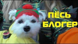 Download Утро глазами щенка   пёс - блогер Mp3 and Videos