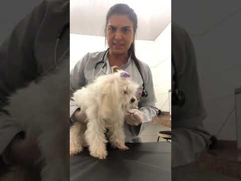 semiologia-do-sistema-cardiovascular-em-cães--parte-i-após-introdução