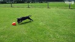 Dog Comet Pan-Stars Spielei Treibei für Hunde