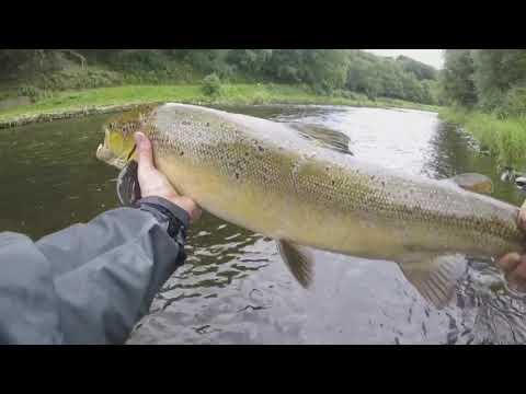 Salmon Fishing South Wales