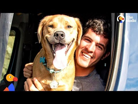 Guy And His Dog Travel Around In A Van | The Dodo