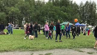 Кемерово Всероссийская выставка собак всех пород ранга САС