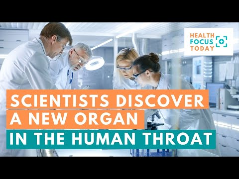 Dutch Scientists Discover a New Organ in the Human Throat