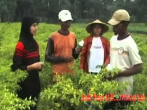 Pengaruh pupuk kompos pada tumbuhan