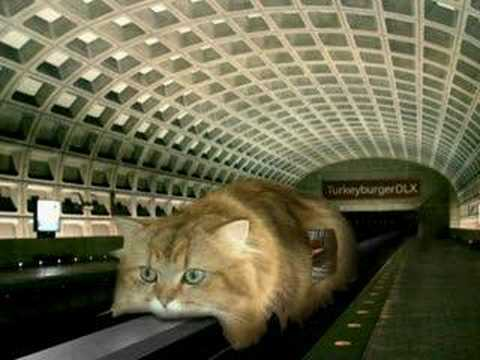Monorail Cat Video