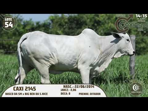 LOTE 54   CAXI 2145