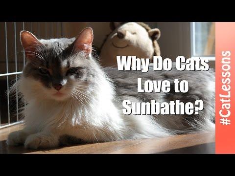 cat care clinic mishawaka