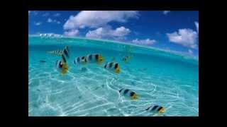Darius & Finlay - Tropicali (G&K Project Bootleg Remix)