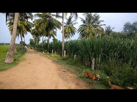 buy 10 acres agricultural land attached to river in