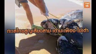 2 วันทะเลไทยสูญเสียฉลาม-เต่ามะเฟือง-ไข่เต่า | 6 ม.ค.63 | TNN  ข่าวเที่ยง