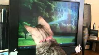 BRAVE Kitten reaction to scary ghost commercial (and mouse pointer)
