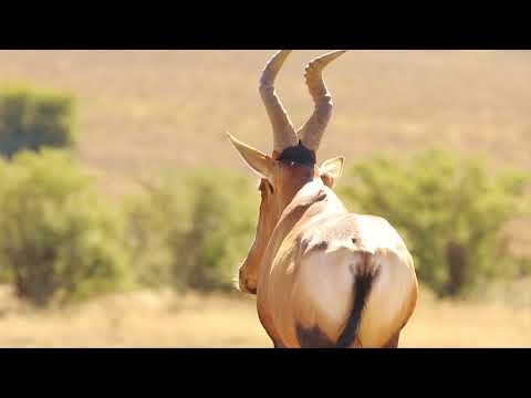 Contrasting Landscapes - Africa's Wild Wonders - The Secrets of Nature