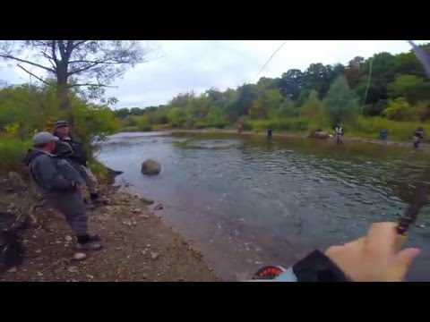 Salmon fishing on the Credit River