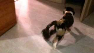 удирающий кот slow-mo