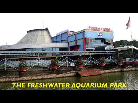 Taman Akuarium Air Tawar - Dunia Air Tawar - Fresh Water Aquarium Park