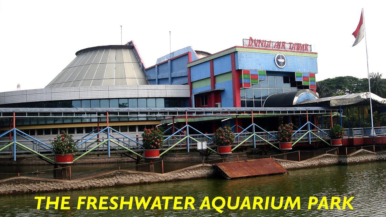 Wisata Ke Tmii Fresh Water Aquarium Park