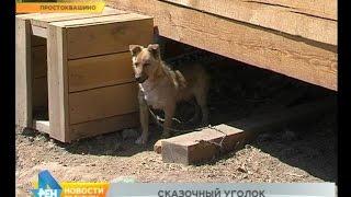 Новости нашего района: Простоквашино