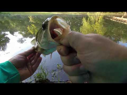 Swan Creek Fishing