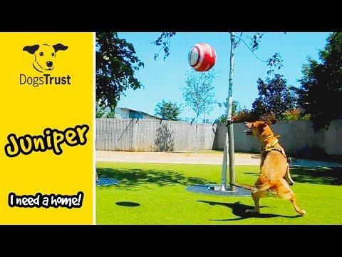 Juniper the Crossbreed is a Footballing Legend! | Dogs Trust Manchester