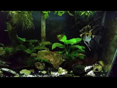 Using Crushed Eggshells To Mineralize My Aquarium
