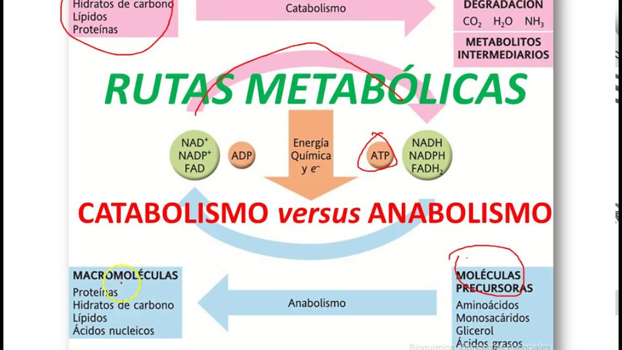 No tienes que ser una gran compañía para comenzar Metabolismo