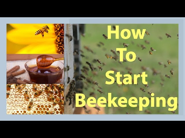 Beekeeping How To Start Beekeeping